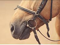Horse Leashes