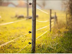 fencing250
