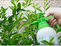 pesticides250