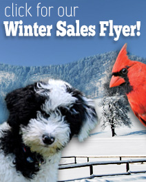 Winter 2016 Sales Flyer