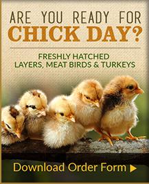 Chick Days 2017